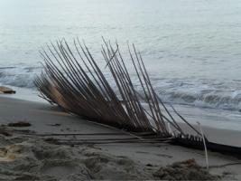 Koh Chang, Thailand broken palm
