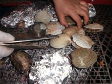 Shellfish Korean coast