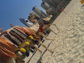 Hilton Camels JBR